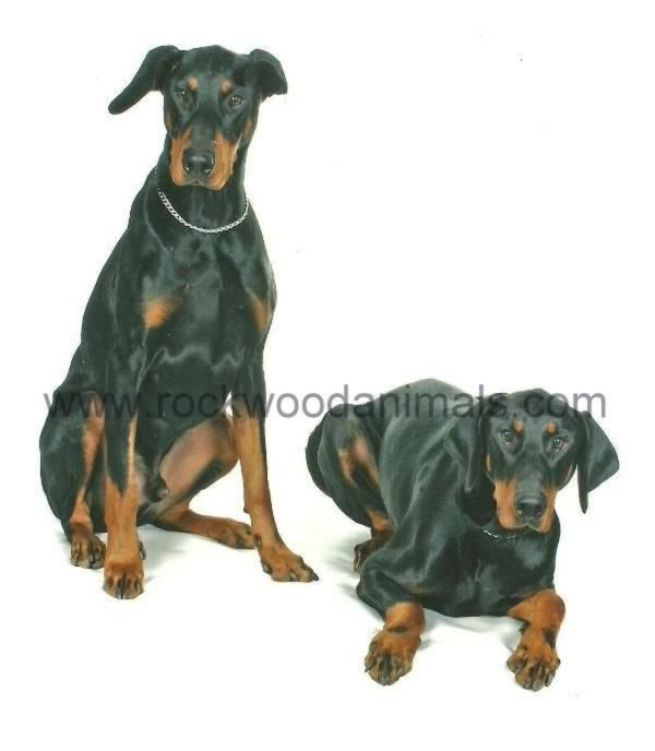 Dobermann Pair